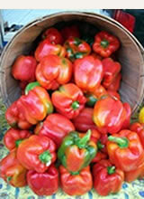 Olden Organics Red Peppers